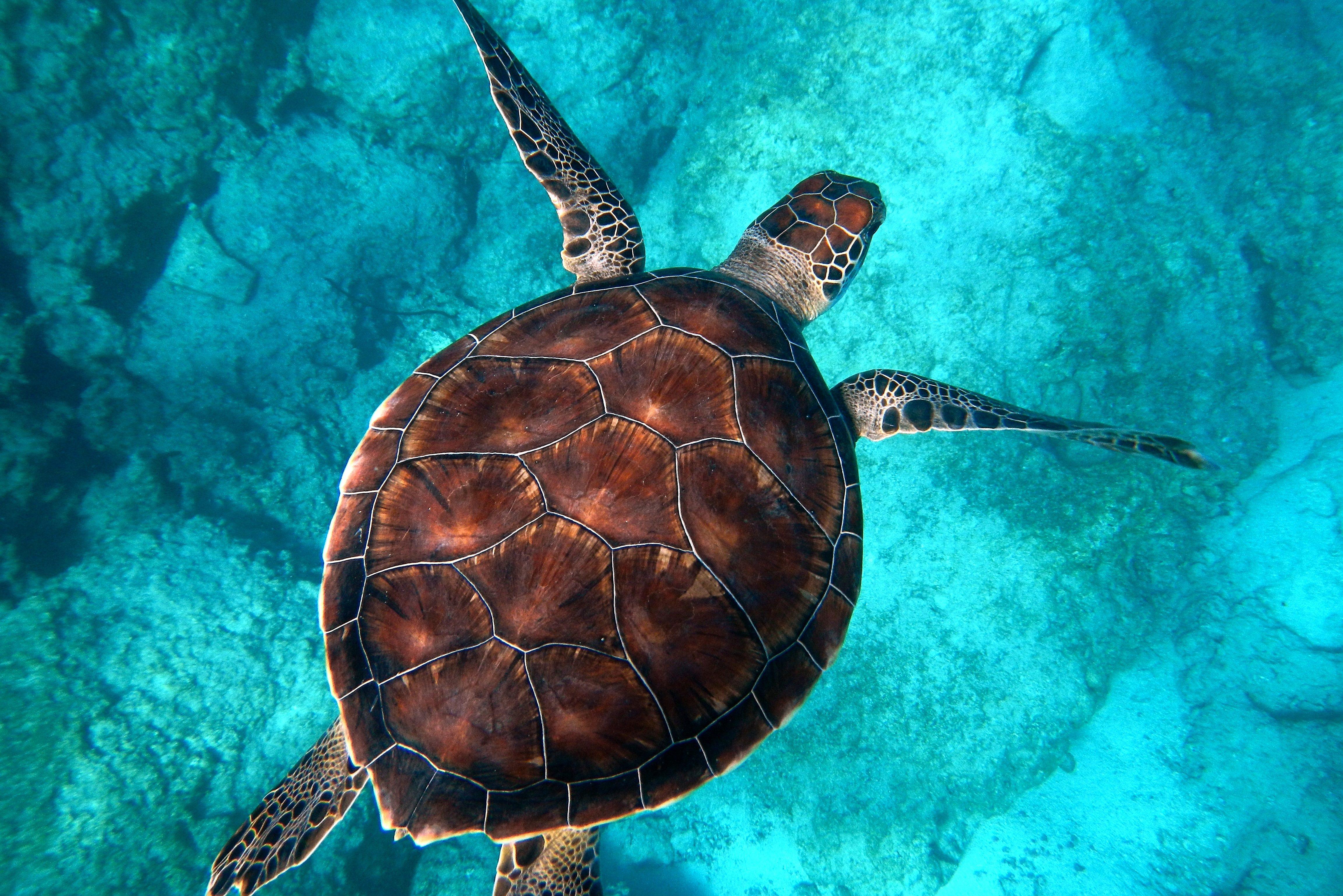 Marine Biodegradable